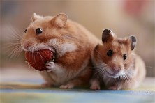 Cute Mouse4